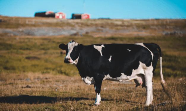 Jak zapobiegać chorobom zwierząt hodowlanych?
